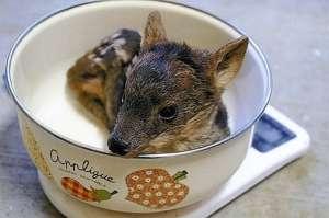 最小品种鹿诞生 盘点世界上最小的十种动物
